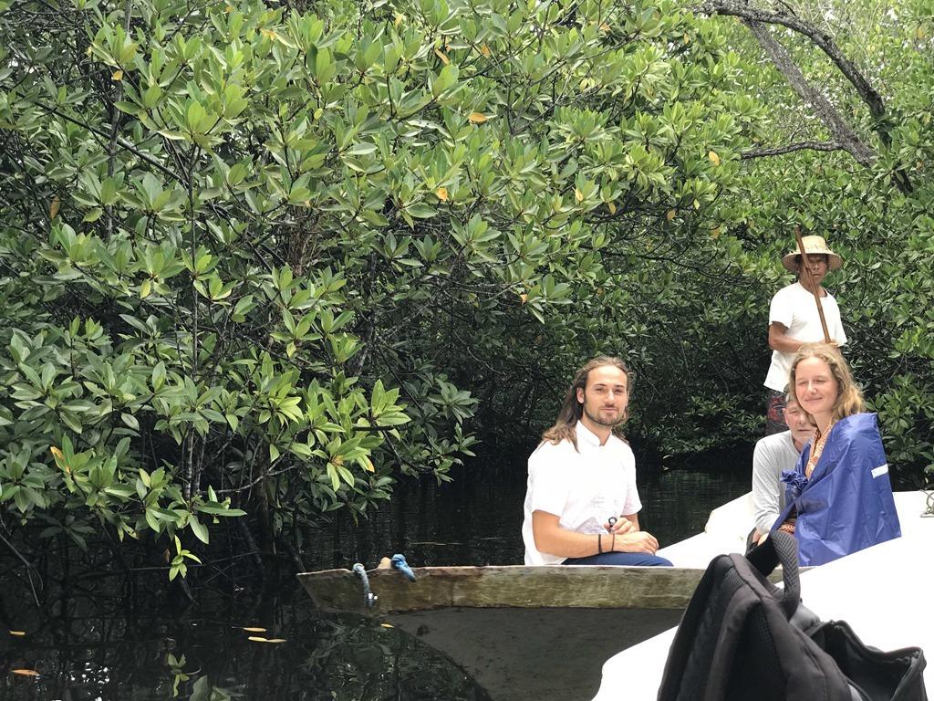 308 Mangroven (M)