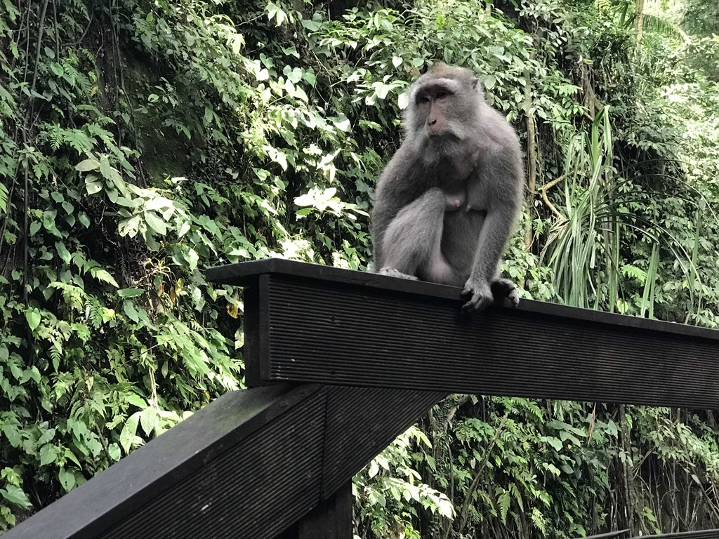 48 Monkey Forest Ubud (M)