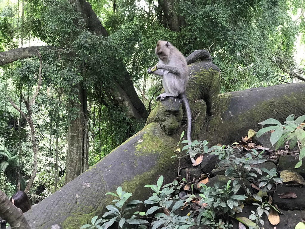 52 Monkey Forest Ubud (M)