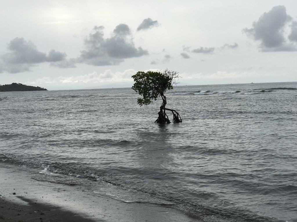 662 Matahari Beach Resort (M)